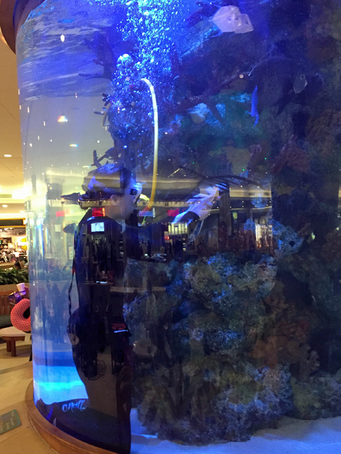 Orlando Airport Aquarium General Discussion Nano Reef